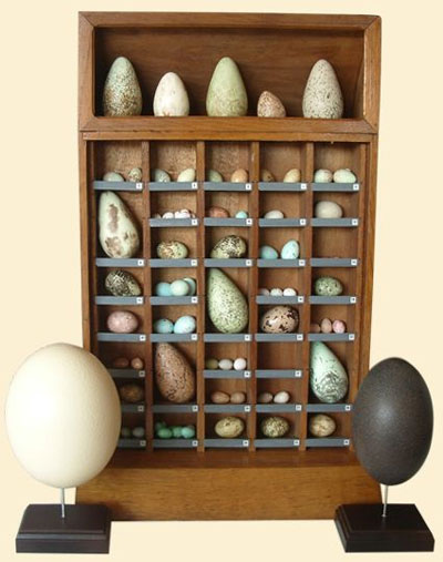 egg_collection