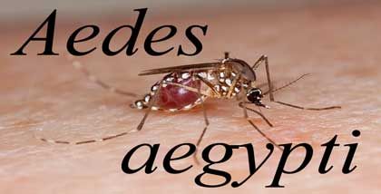 featured_imae_mosquitoes