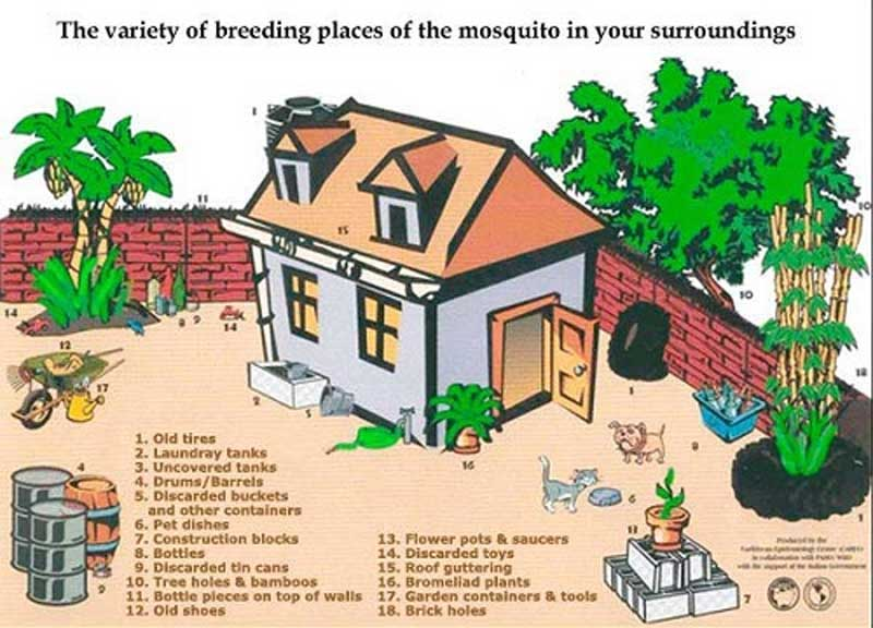 mosquito_breeding