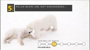 polar bear not endangered.png