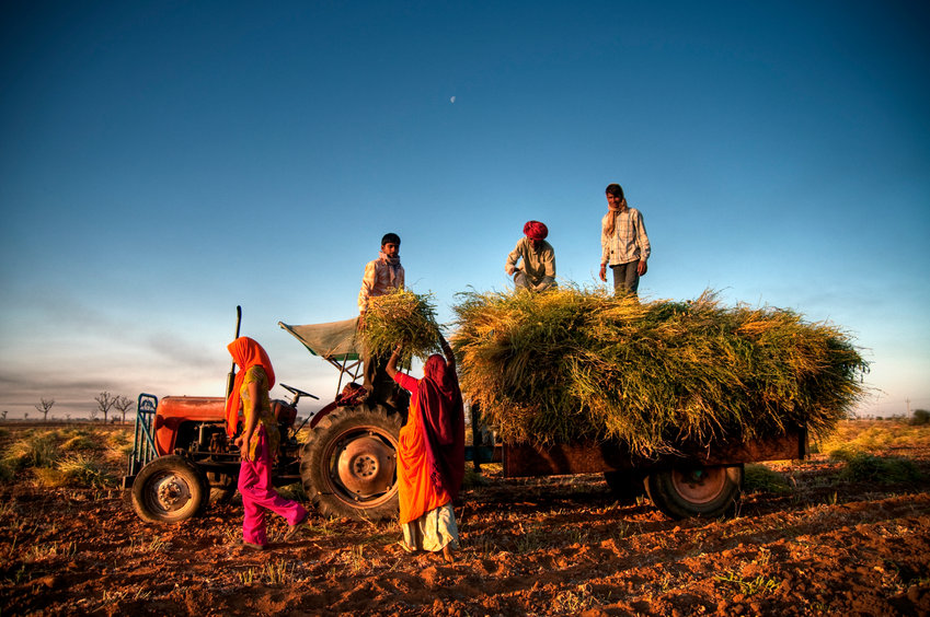 Here's Why Climate Alarmists Are Ignoring All-Time Record Crop Production in India